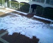 天地総子 公式ブログ/東京雪景色 画像3