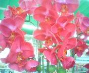 天地総子 公式ブログ/春を運んでくれる花たち 画像3