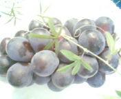 天地総子 公式ブログ/秋の味覚「ぶどう」と甲州『グレイスワイン』 画像1