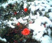 天地総子 公式ブログ/東京の雪 画像2
