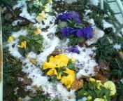 天地総子 公式ブログ/東京の雪 画像3