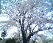天地総子 公式ブログ/春風に誘われて 画像3
