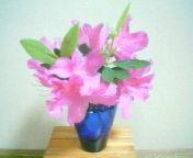 天地総子 公式ブログ/つつじの花に癒されて 画像1