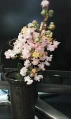 天地総子 公式ブログ/サルスベリの花 画像2