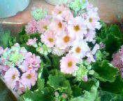 天地総子 公式ブログ/春を運んでくれる花たち 画像1