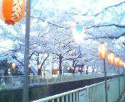 天地総子 公式ブログ/桜満開 画像2