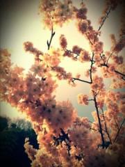 ひな(GothicRomanticスキルアップ) 公式ブログ/桜。 画像1