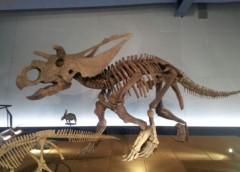 ひろき 公式ブログ/※恐竜2※ 画像2