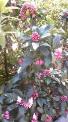 SONOMI 公式ブログ/春の足音が 画像1