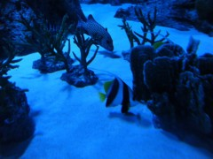 SONOMI 公式ブログ/水族館 画像2