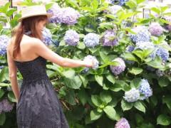 SONOMI 公式ブログ/紫陽花 画像2