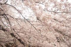 SONOMI 公式ブログ/目黒川 画像1