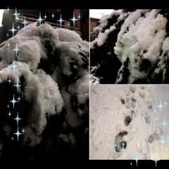 朝比奈ゆうひ 公式ブログ/大雪((((;゚Д゚))))))) 画像1