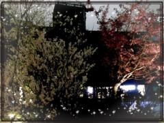 朝比奈ゆうひ 公式ブログ/夜桜♪( ´θ`)ノ 画像1