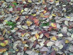 朝比奈ゆうひ 公式ブログ/秋から冬へ 画像1