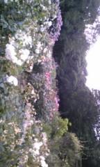 朝比奈ゆうひ 公式ブログ/ お花畑で撮影( *бωб) 画像2