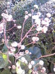 朝比奈ゆうひ 公式ブログ/ 高嶺の花に恋した事ありますか? 画像1