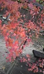 朝比奈ゆうひ 公式ブログ/紅葉レポート 画像1