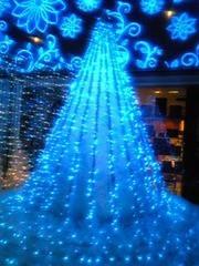 朝比奈ゆうひ 公式ブログ/ クリスマスツリー大集合(*´艸`*) 画像1
