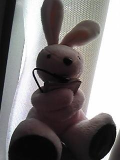 ウサギグッズ