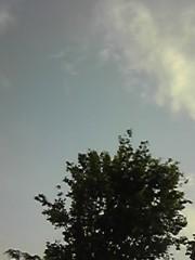 朝比奈ゆうひ 公式ブログ/ 金環日食の時の周り(・ω・)ノ 画像2