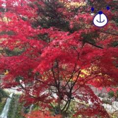朝比奈ゆうひ 公式ブログ/紅葉(・ω・)ノ 画像1
