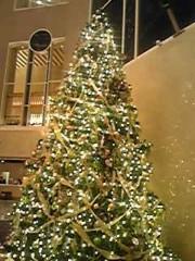 朝比奈ゆうひ 公式ブログ/ハイアットのクリスマスツリー♪ 画像1
