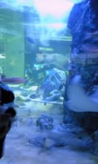 朝比奈ゆうひ 公式ブログ/ ゆうひガイドの水族館ツアー( *бωб) 画像1