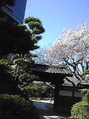 朝比奈ゆうひ 公式ブログ/桜が満開( *бωб) 画像2