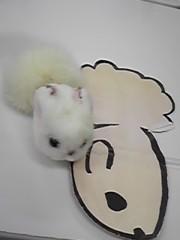朝比奈ゆうひ プライベート画像 61〜80件/ゆひゆひの森2 おや?(゜.゜)