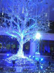 朝比奈ゆうひ 公式ブログ/どのツリーがお好き? 画像1