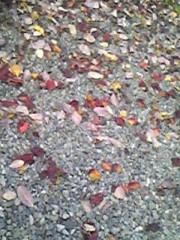 朝比奈ゆうひ 公式ブログ/秋の終わり 画像1
