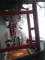 朝比奈ゆうひ 公式ブログ/ 神社の桜も満開⊂(*^ω^*)⊃ 画像3