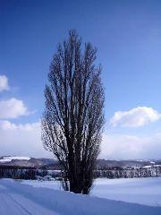 朝比奈ゆうひ 公式ブログ/地球ごとエアコンで冷し中華←← 画像3