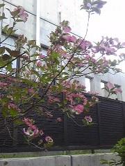 ゆひ家の庭