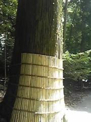 朝比奈ゆうひ 公式ブログ/ 昨日の答え(・ω・)ノ 画像1
