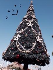 朝比奈ゆうひ 公式ブログ/ディズニーシーのクリスマスツリー(^ν^) 画像1