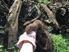 朝比奈ゆうひ 公式ブログ/リスちゃんに会いましたU+FE0F 画像2