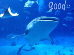 朝比奈ゆうひ 公式ブログ/美ら海水族館(・ω・)ノ  画像1