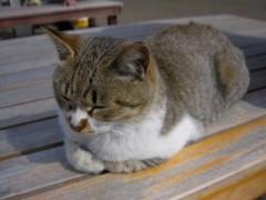朝比奈ゆうひ プライベート画像 21〜40件/ゆうひ教室 猫ちゃん