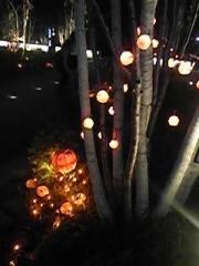 朝比奈ゆうひ 公式ブログ/ハロウィンのスカイツリー( *бωб) 画像1