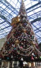 朝比奈ゆうひ 公式ブログ/ クリスマスツリー大集合(*´艸`*) 画像2
