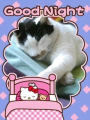 笹井紗々 公式ブログ/ねこにゃんさん。 画像3