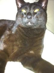 CHILL CAT 公式ブログ/にゃー 画像1