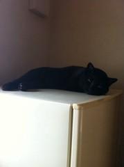 CHILL CAT 公式ブログ/サンダーに 画像1