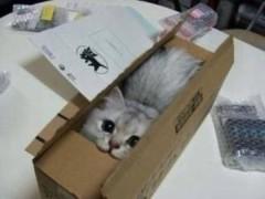 CHILL CAT 公式ブログ/あざすねー!! 画像1