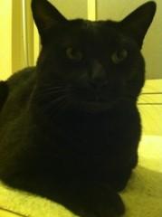 CHILL CAT 公式ブログ/るんるんるん〜 画像1