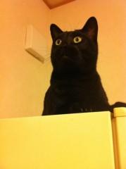 CHILL CAT 公式ブログ/ぐへぇ。 画像1