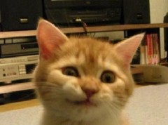 CHILL CAT 公式ブログ/2011-09-29 01:35:57 画像1