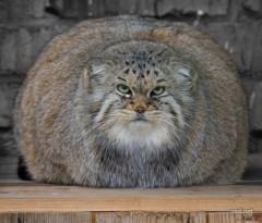 CHILL CAT 公式ブログ/いや〜 画像1